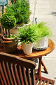 Potted green plants