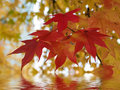 Beautiful autumn red yeallow  leaves reflection