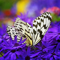 Paradise of butterfly III