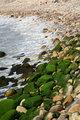 Pacific Shoreline