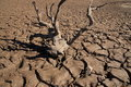 Drought Cracks