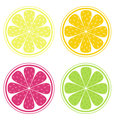 Vector - Citrus fruit background vector - Lemon, Lime and Orange