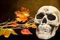 Halloween scary skull