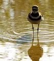 Migrating Bird