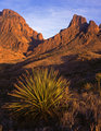 Chisos Mountains and Desert Plant