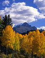 Mt. Sneffels and Aspens