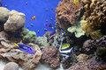 Monterrey Aquarium 9