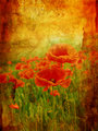 Beautiful vintage background with poppies