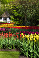 Spring garden with colorful tulips