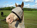 Blinded Horse