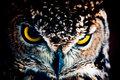 Look me - Athene noctua