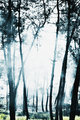 Misty forest scene with beams of sunlight