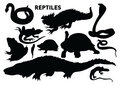 reptiles