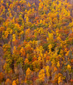 Colorful fall foliage on hillside