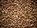 Buckwheat texture background closeup.