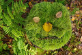 Tree stump with face of moss