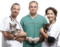 Group of vets carrying Chihuahuas in front of white background