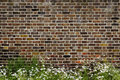 Brick wall and daisies