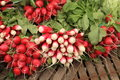 bundles of red and white radishes at market