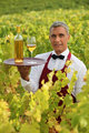 Waiter serving white wine in a vineyard
