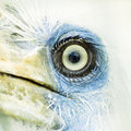 bird eye closeup 