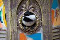 Black-capped chickadee in the birdhouse