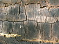 Dark bark of a tree