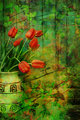 Grunge, Spring background with red tulips