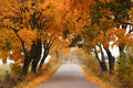Autumn maple road.