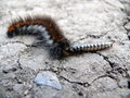 Caterpillar eats other insect