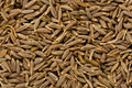 Cumin Seeds (Cuminum cyminum)