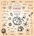Hand-Drawn Vintage Inspired Ornaments, Flowers & Flourishes
