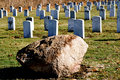Cemetery military headstones