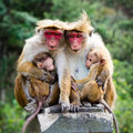 Monkey family