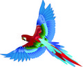 Parrot Flying