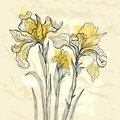 Iris flower vector illustration.