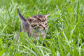small kitten in the grass