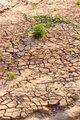Dry cracked earth , but there is life growing.