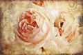 Vintage rose painting