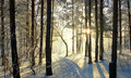 Beautiful landscape in winter forest