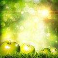 Fresh tasty apple on the grass. Abstract natural backgrounds