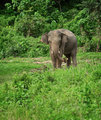 Elephant eats in nature