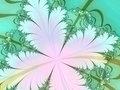 White flower fractal
