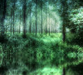 HDR Mystical Woods