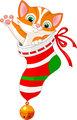 Christmas cat in sock