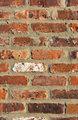 Brick Wall - Portrait Background
