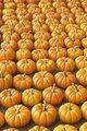 Many many pumpkins