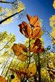 Leaf in the sun light