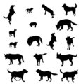 Contours of dogs