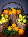 Harvest of citrus